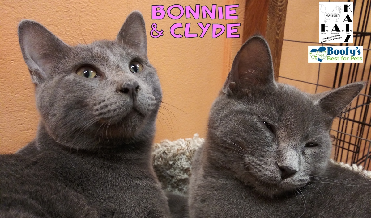 Bonnie and Clyde adoptable kittens in Albuquerque