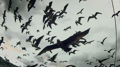 1_Leviathan.jpg