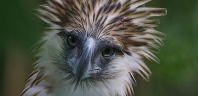 Bird of prey 2.jpg