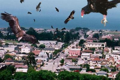 Birdemic%202.jpg