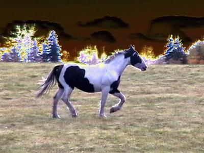 FP_760_Horse.jpg