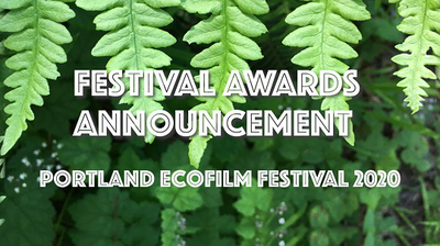 Festival_Festival_Awards_Announcement
