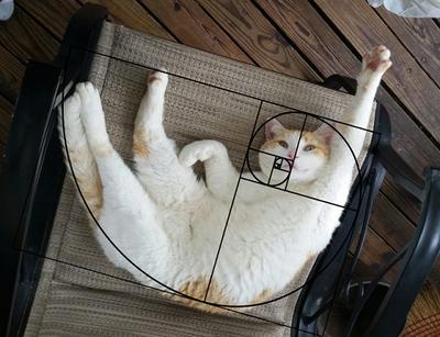 fibonacci-composition-cats-furbonacci-91__700_sm.jpg