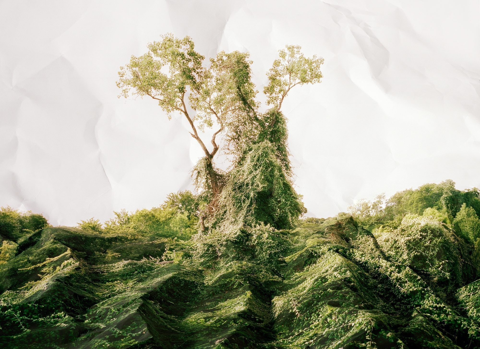 """The painting """"Response to Print of *Kudzu, Texas*"""" by Laura Plageman, which shows a landscape engulfed by the kudzu vine."""