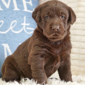 Find The Right Puppy For Your Family Puppyspot