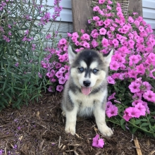 Puppies sold in Tennessee | PuppySpot