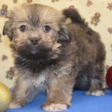 Puppies Sold In Nevada Puppyspot