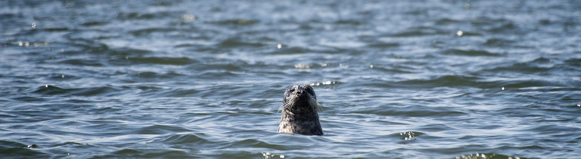 A seal in Commencement Bay