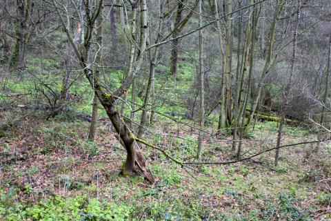 Julia's Gulch habitat site
