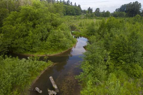 Upper Clear Creek habitat site