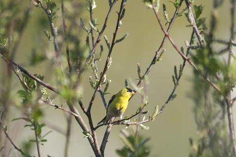 A bird at Gog-le-hi-te