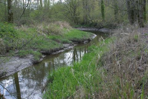Lower Clear Creek
