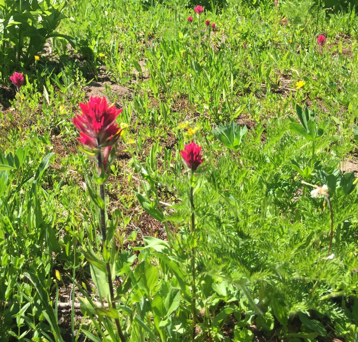 photo of red flowers
