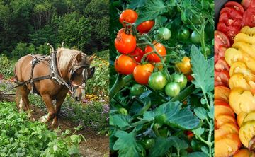 Abode Farm Class – Fall Harvests