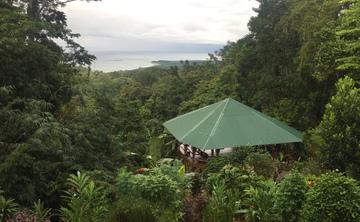 Align to Shine: Jungle Discovery Yoga Retreat