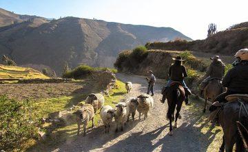 SHAMANIC HORSEBACK EXCURSION - COLCA CANYON, PERU