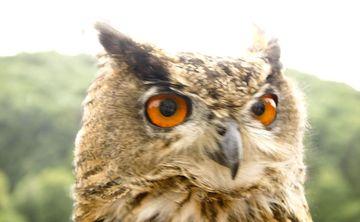 Autumn Equinox Drum Circle & Owl Release