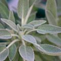 TEST Herbal Medicine Retreat