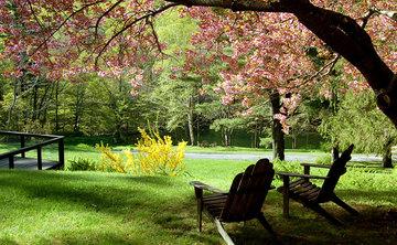 Living Landscape Immersion