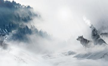Howl - A 5Rhythms Embodiment New Year's Retreat