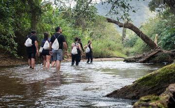 Healing in Brazilian Waters