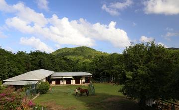 Equine Workshop