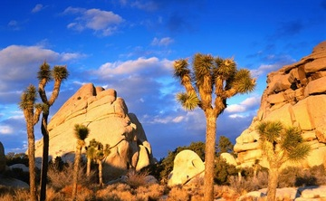 Breathing Deep Peace in Joshua Tree