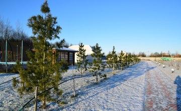 Magic winter in Russia. Healing and folk medicine retreat.