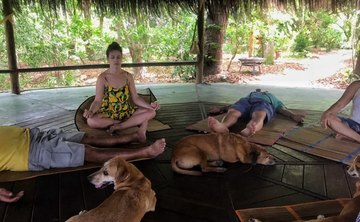 Yoga with dogs - 10 nights