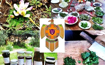 Traditional Medicinal Plant Workshop July 13-17
