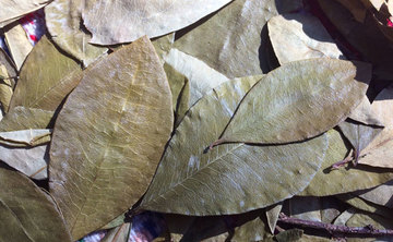 Traditional Shamanic Herbalism Skills Immersion Week In Peru