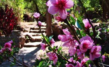 Ayahuasca Women's Retreat - Sacred Valley