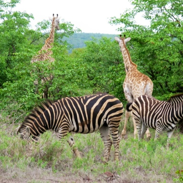 Soul Safari Holistic Retreats