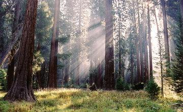 The Meaningful Life Summer Meditation Retreat
