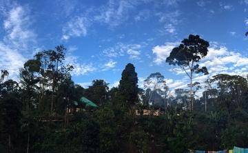 12-day Ayahuasca Medicine Retreat in the Amazon Rainforest of Ecuador