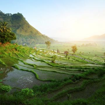 Soul Shine Bali