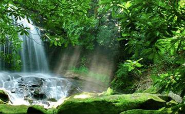 Premium Ayahausca Retreat Amazon Jungle Pucallpa Peru (Aug 2019)