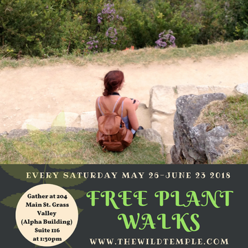 Free Plant Walks w The Wild Temple