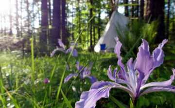 Back to Nature Women's Yoga Retreat in Oregon, July 2018 Session 2