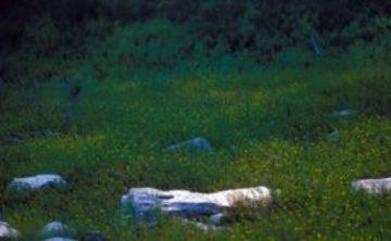 Peaceful Dwelling: Meditation Intensive