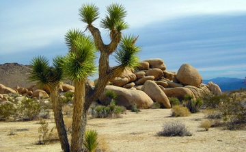 4 Day Desert Reset - Joshua Tree, California