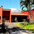 Ceiba Maya