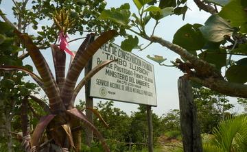8 Day Amazon Nourishing Detox & Yoga Retreat in Tarapoto Peru