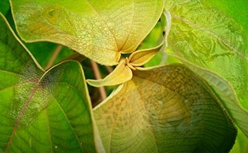 Six Week Plant Medicine Course – $4450