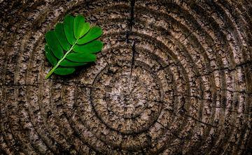 Ayurvedic Meditation and Yoga Week Retreat