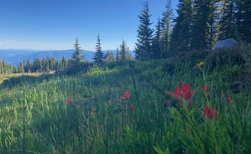 Mt. Shasta Spiritual Venus Love Retreat