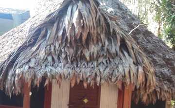 Ayahuasca Retreat & Masterplant Dietas in Pucallpa Area