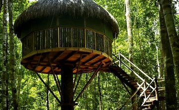 Ayahuasca Retreat 7 days