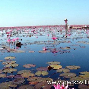 Gecko Villa Farm Stay in Rural Thailand