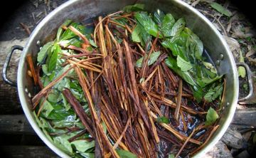 Ayahuasca Sacred Plant Medicine Retreat in Costa Rica